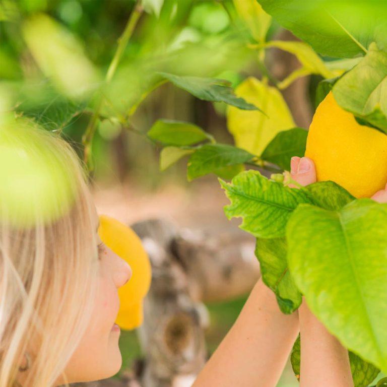 Ambiental Jengibre y limón